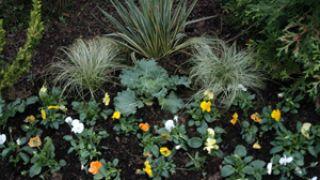 Flores de invierno en parterre