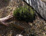 Plantación en gravilla al sol