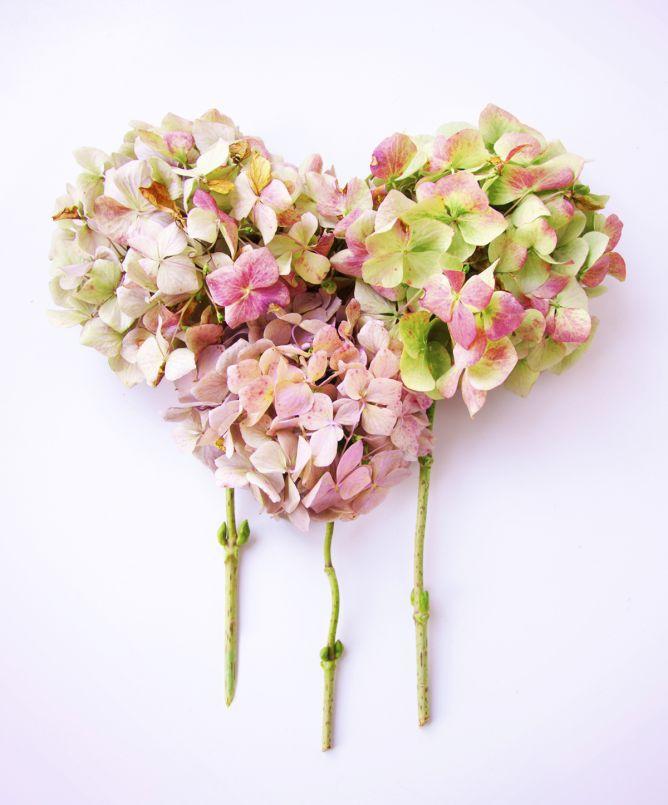 corazones flores 2