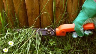 cortar grama del jardín a tijera