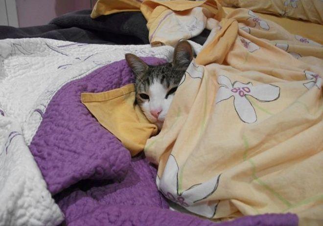 Gato ganador concurso mascotas enero 2013