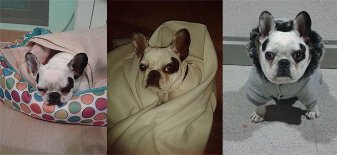 Perro ganador concurso mascotas enero