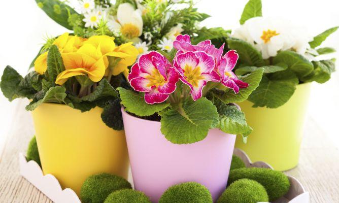 Plantas de principios de primavera hogarmania - Hogarutil plantas ...