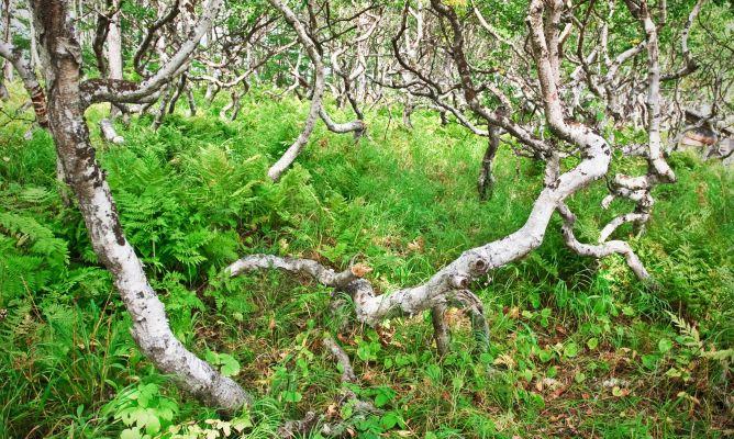 El acodo bricoman a for Bricomania jardin
