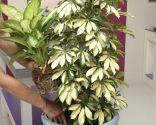 Composición con plantas de follaje amarillo