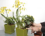 Composición con orquídea de flor amarilla