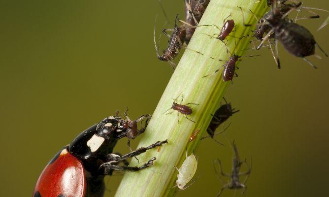 Plagas de jard n bricoman a for Insectos del jardin