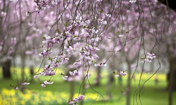 Tareas de jardiner a en marzo hogarmania - Hogarmania jardineria ...