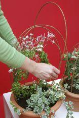 Trepadoras de flor blanca en interior