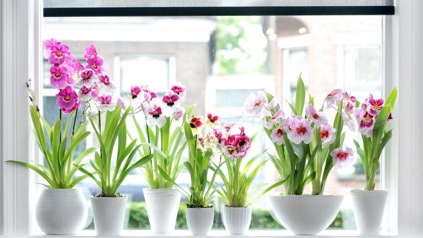 Fichas De Plantas De Interior Y Exterior