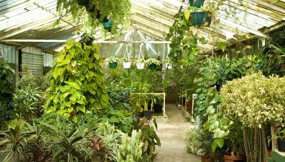 Cortinas vegetales con plantas colgantes bricoman a for Plantas suculentas colgantes