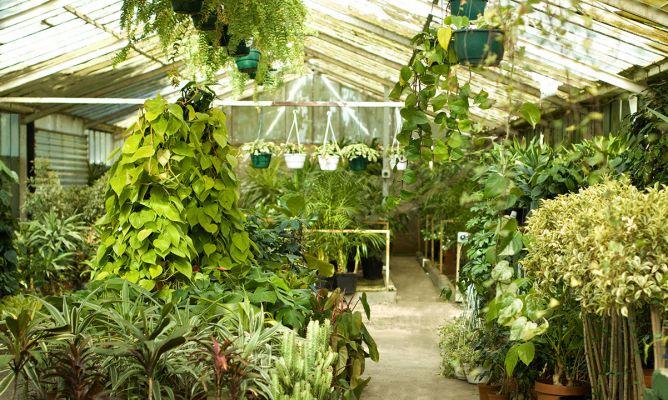 plantas colgantes de interior bricoman a