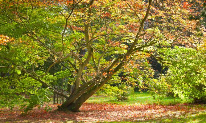 Tareas de jardiner a en abril hemisferio sur hogarmania - Hogarmania jardineria ...