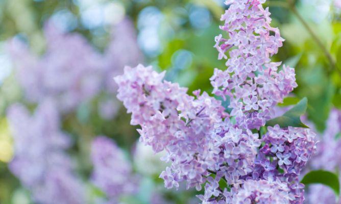 Tareas de jardiner a en mayo hogarmania - Hogarmania jardineria ...