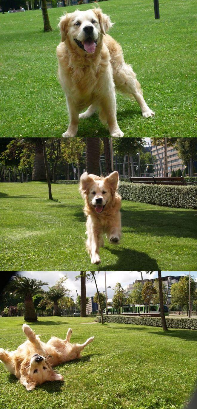 Boss perro ganador concurso mascotas abril