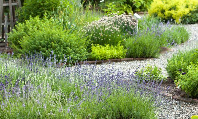 Mantenimiento b sico del jard n parterre de arbustos for Arbustos para jardin