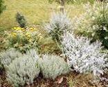 Mantenimiento básico del jardín: parterre de arbustos