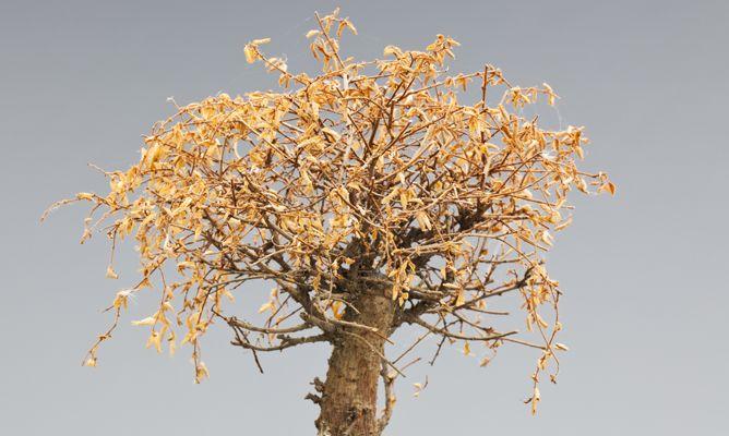 Nuevos usos para plantas secas bricoman a - Plantas secas decoracion ...