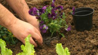 Huertas ornamental en otoño - Paso 2
