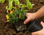 Huerta ornamental para otoño