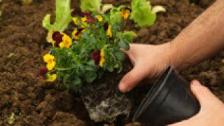 Huerta ornamental en otoño - Paso 4