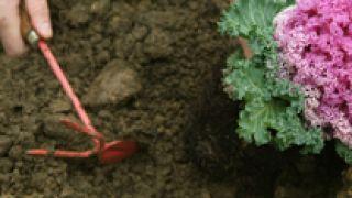Huerta ornamental  en otoño - Paso 5