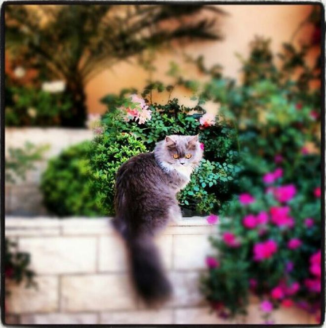 Lola gato ganador concurso mascotas abril