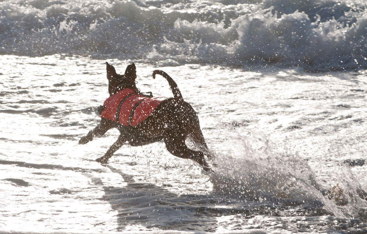 rescate perros socorristas