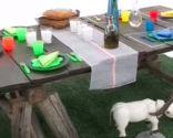 Decorar mesa de picnic y barbacoa adultos niños