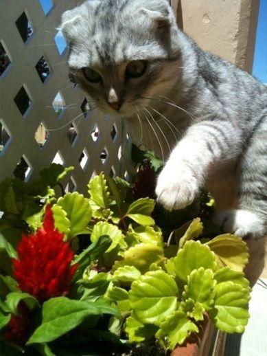 Barney gato ganador concurso mascotas mayo 2013
