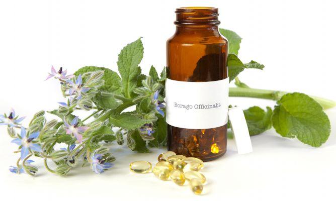 Borraja planta medicinal estimulante hogarmania - Hogarutil plantas ...