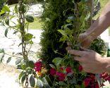 Plantación de enredaderas