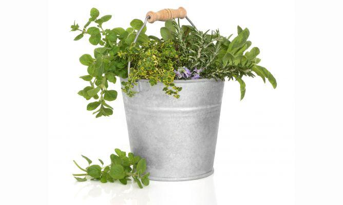 Jard n vertical con arom ticas bricoman a for Bricomania jardin