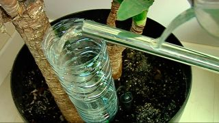 Colocar un sistema de riego por goteo