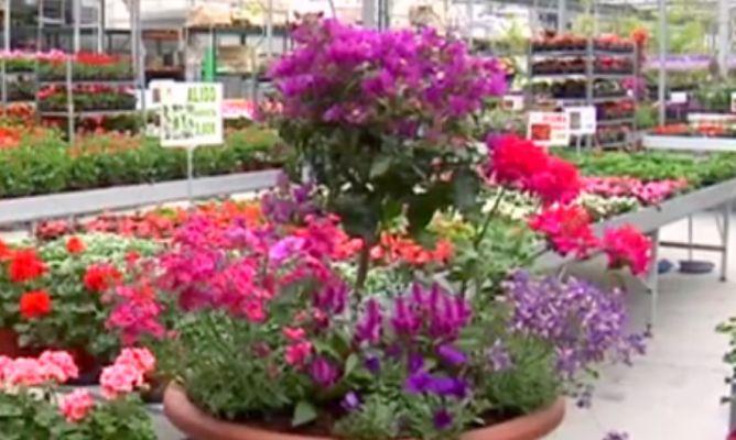5 composiciones florales perfectas para el verano - Composiciones Florales