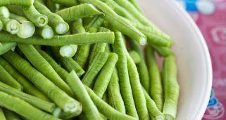 Cultivar jud as verdes hogarmania - Cultivar judias verdes ...