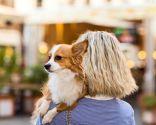 Locales ciudad para ir con perros