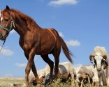 Traslado animales de granja