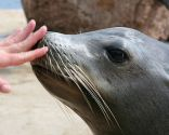 terapia con leones marinos
