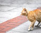 Rescate de gato callejero