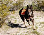 Perros de salvamento o rescate