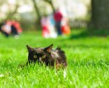Mascoteros ataque a gatos callejeros