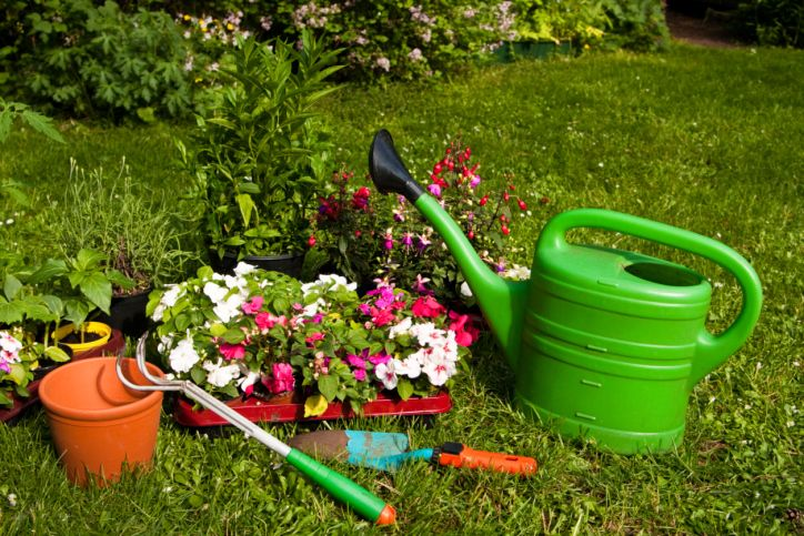 Plantar alegrías guineanas en el jardín