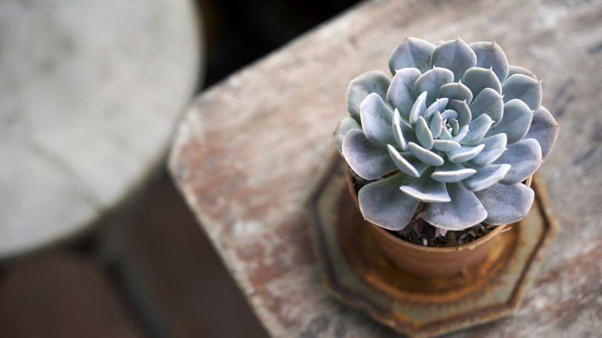 15 plantas pequeñas con encanto - Hogarmania