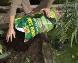 Planta para evitar topos