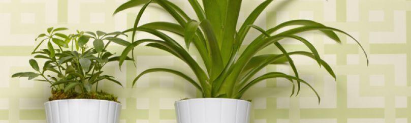 Plantas de interior - Macetas para plantas de interior ...