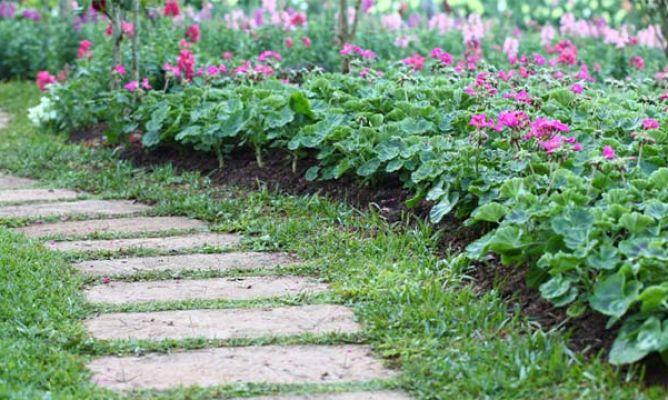 Plantar geranios en el jard n hogarmania - Hogarmania jardineria ...