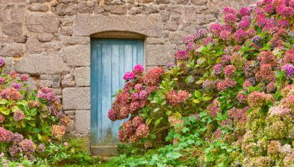 Enfermedades de las hortensias hogarmania - Cuidado de las hortensias ...