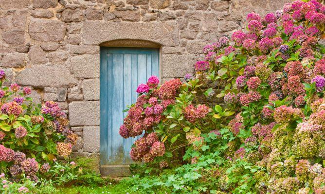 Cuidados de la hortensia hogarmania - Cuidado de las hortensias ...