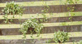 Hacer un cuadro con suculentas bricoman a - Cuadro jardin vertical ...